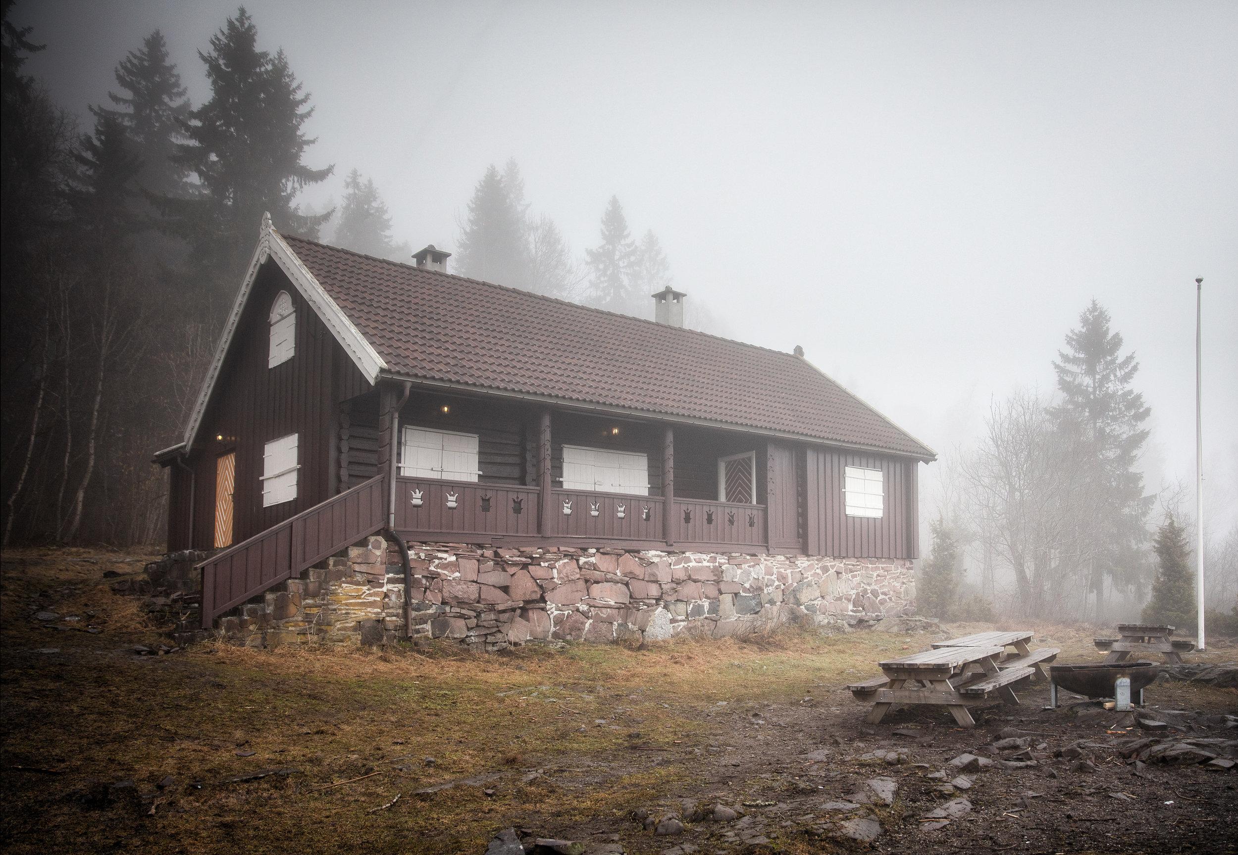 skog-8.jpg