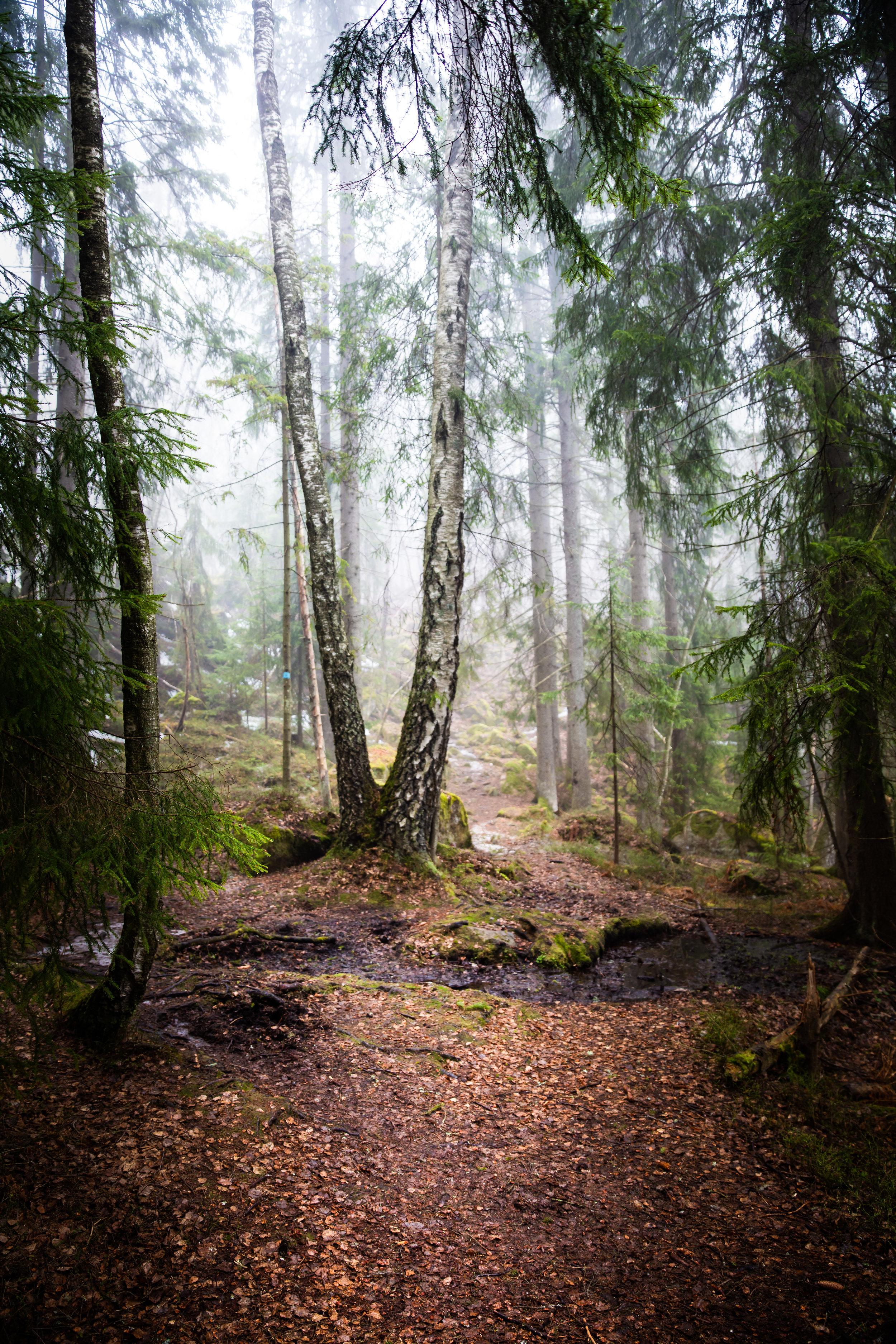skog-4.jpg