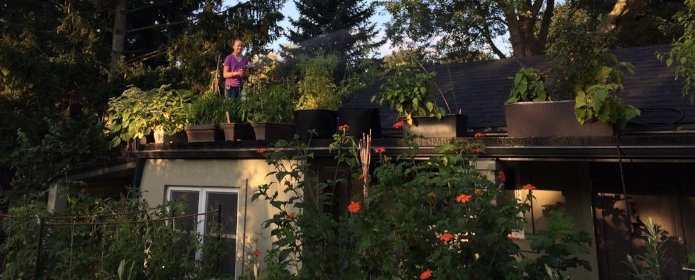 Watering my rooftop garden