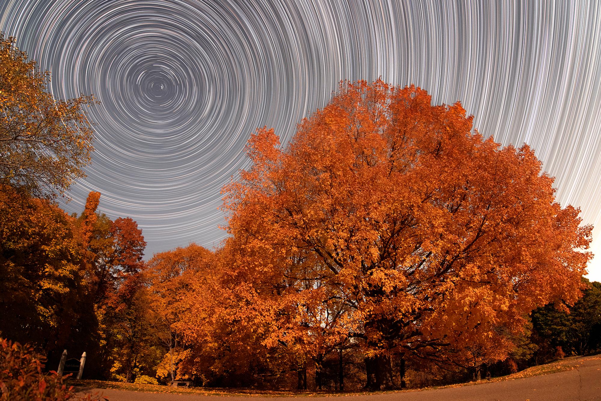 Starry Arb Night.jpg