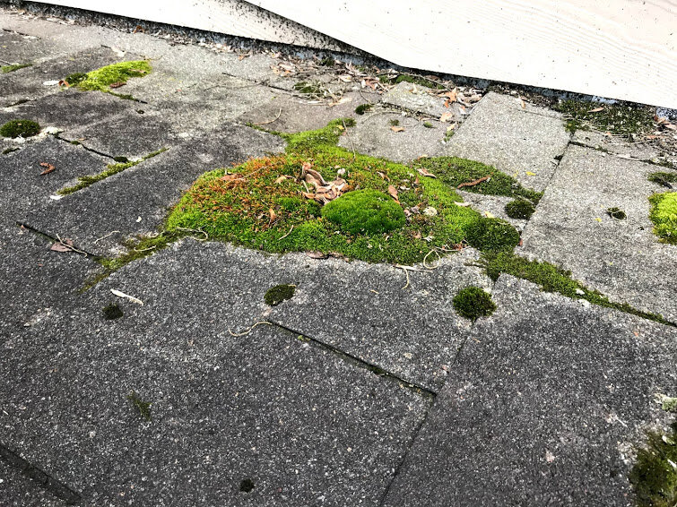 moss and hail on roof.jpg