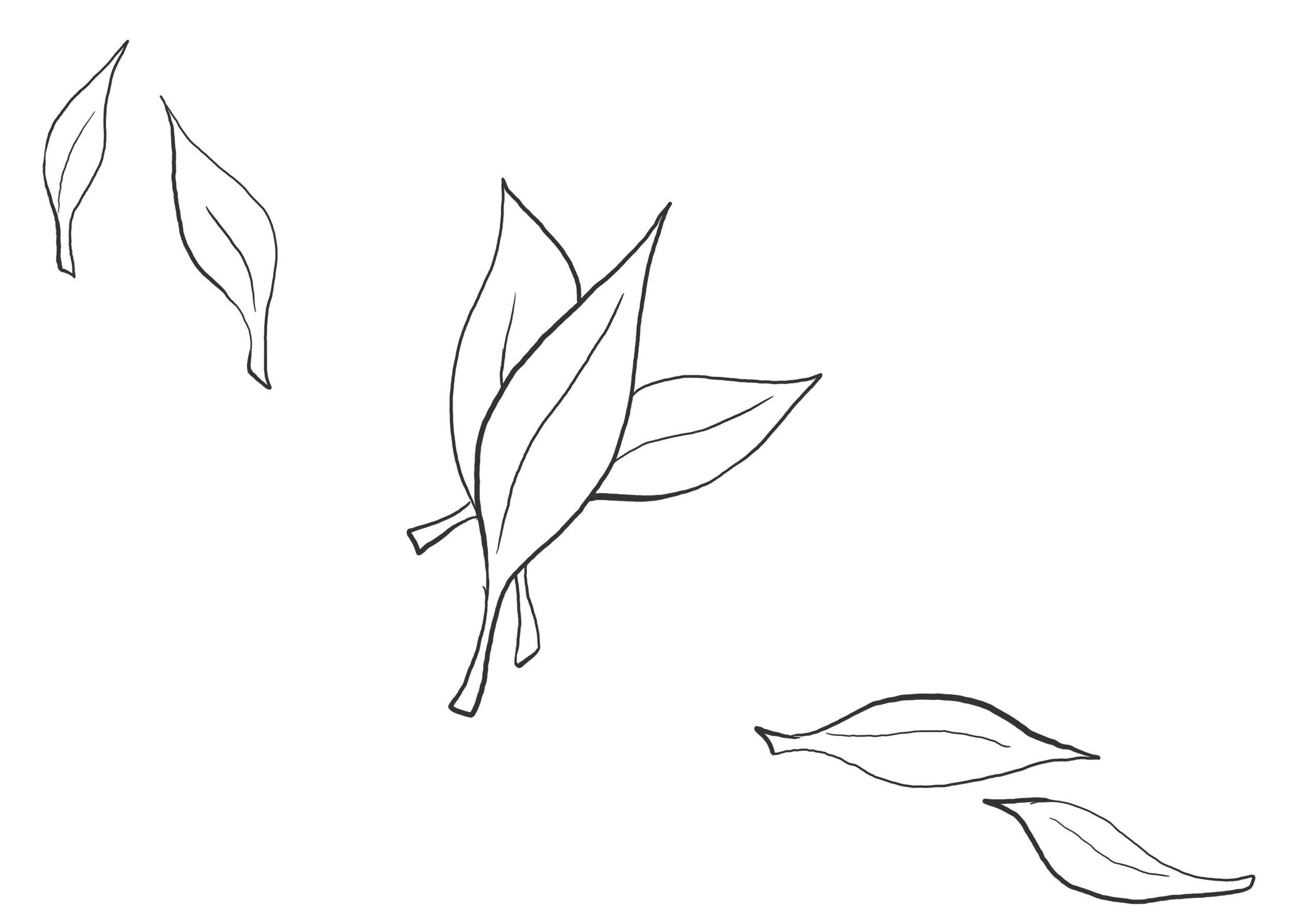 era-Step 5 parts.jpg