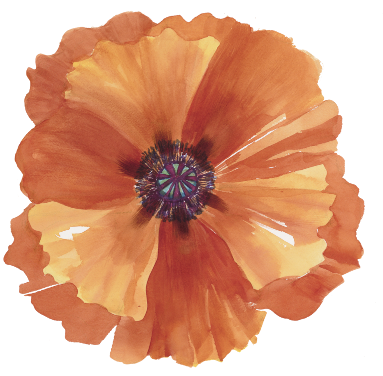 1-Poppy-Extract-smaller-768x753.png