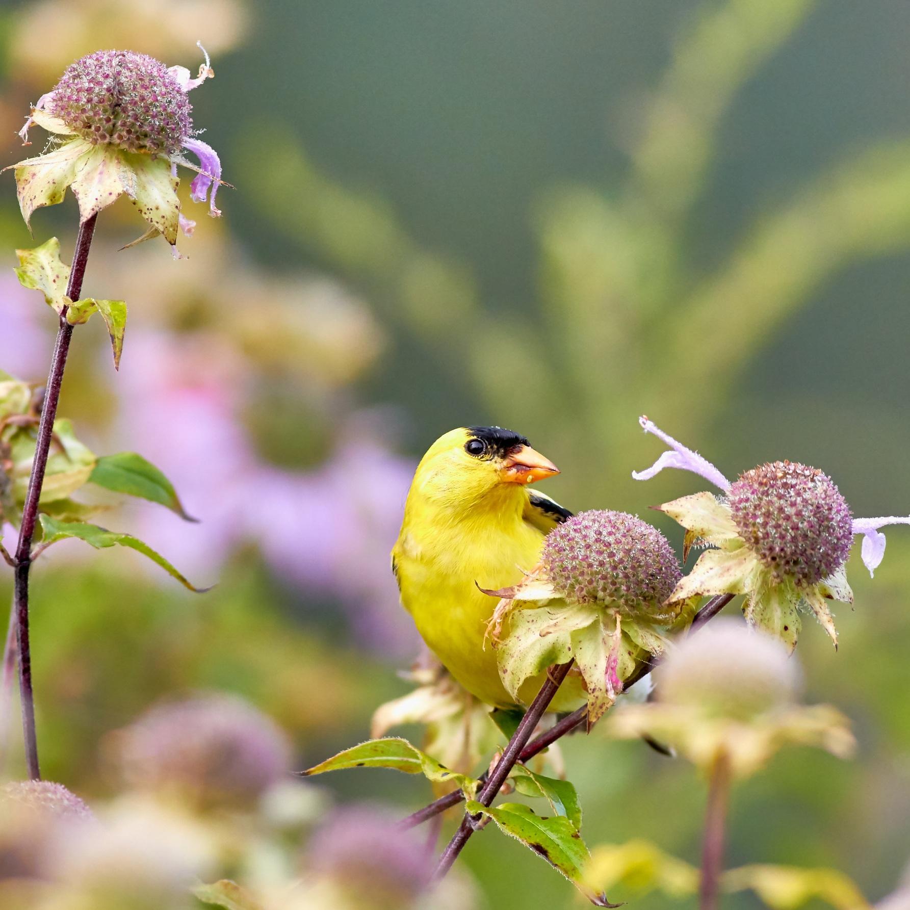 Birds and Botany -