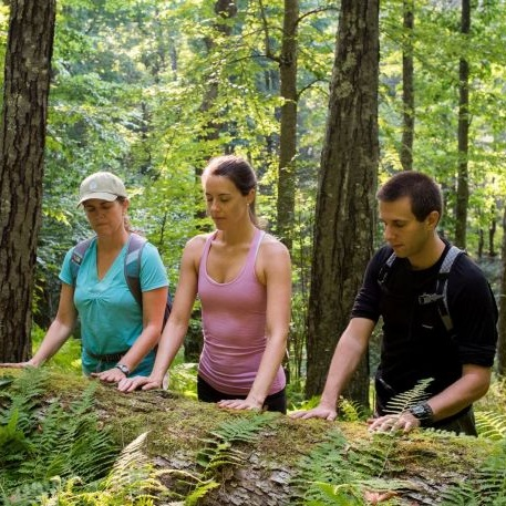 AWAKEN YOUR SENSES, FOREST THERAPY DAY RETREAT -