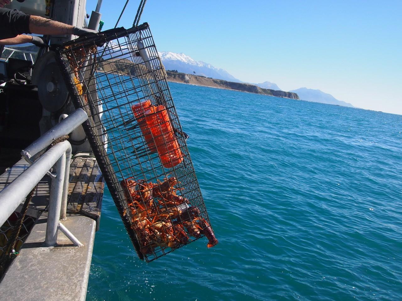 Kaikoura-fishing-craypots.jpg