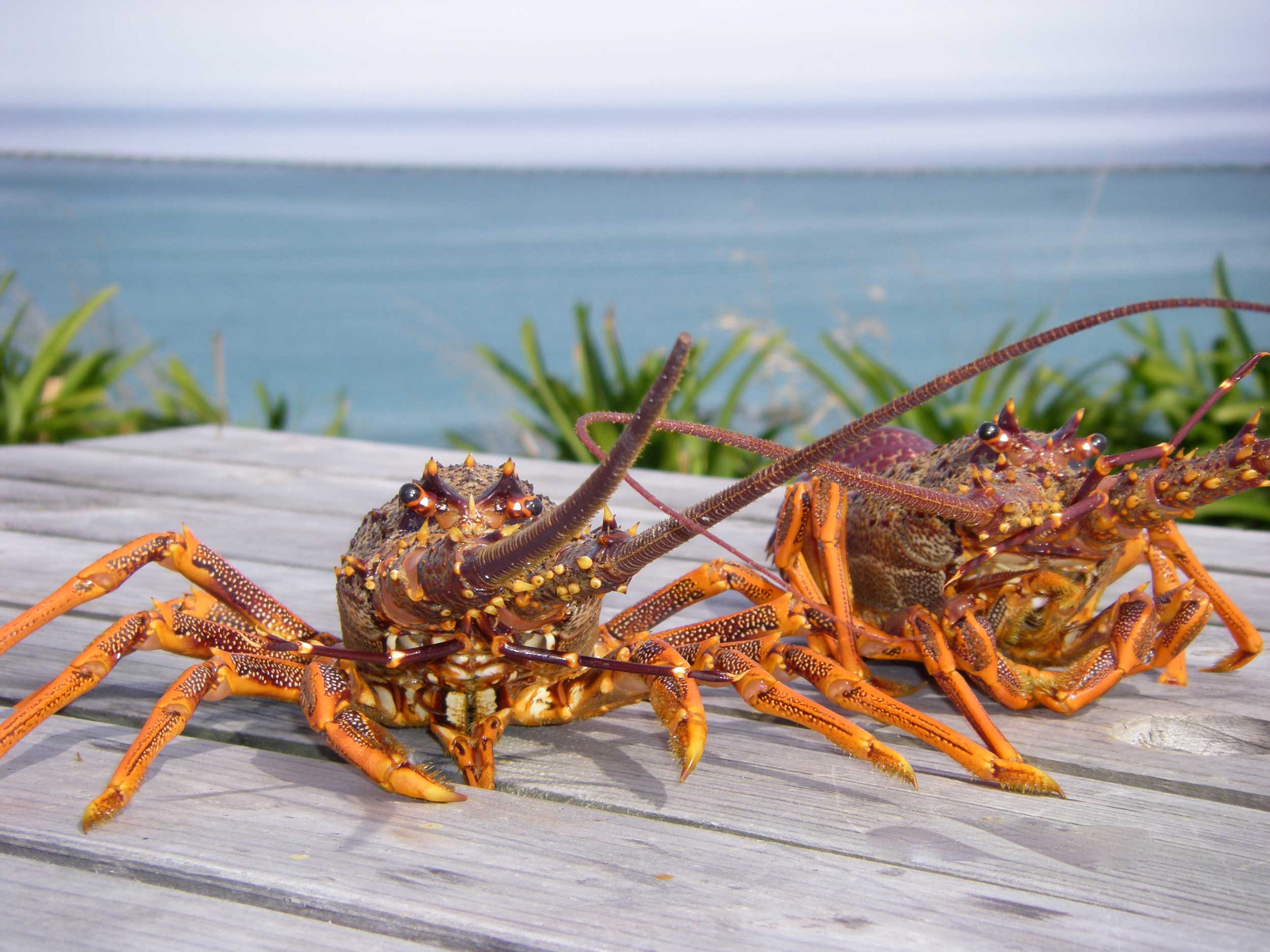 crayfish-home.jpg