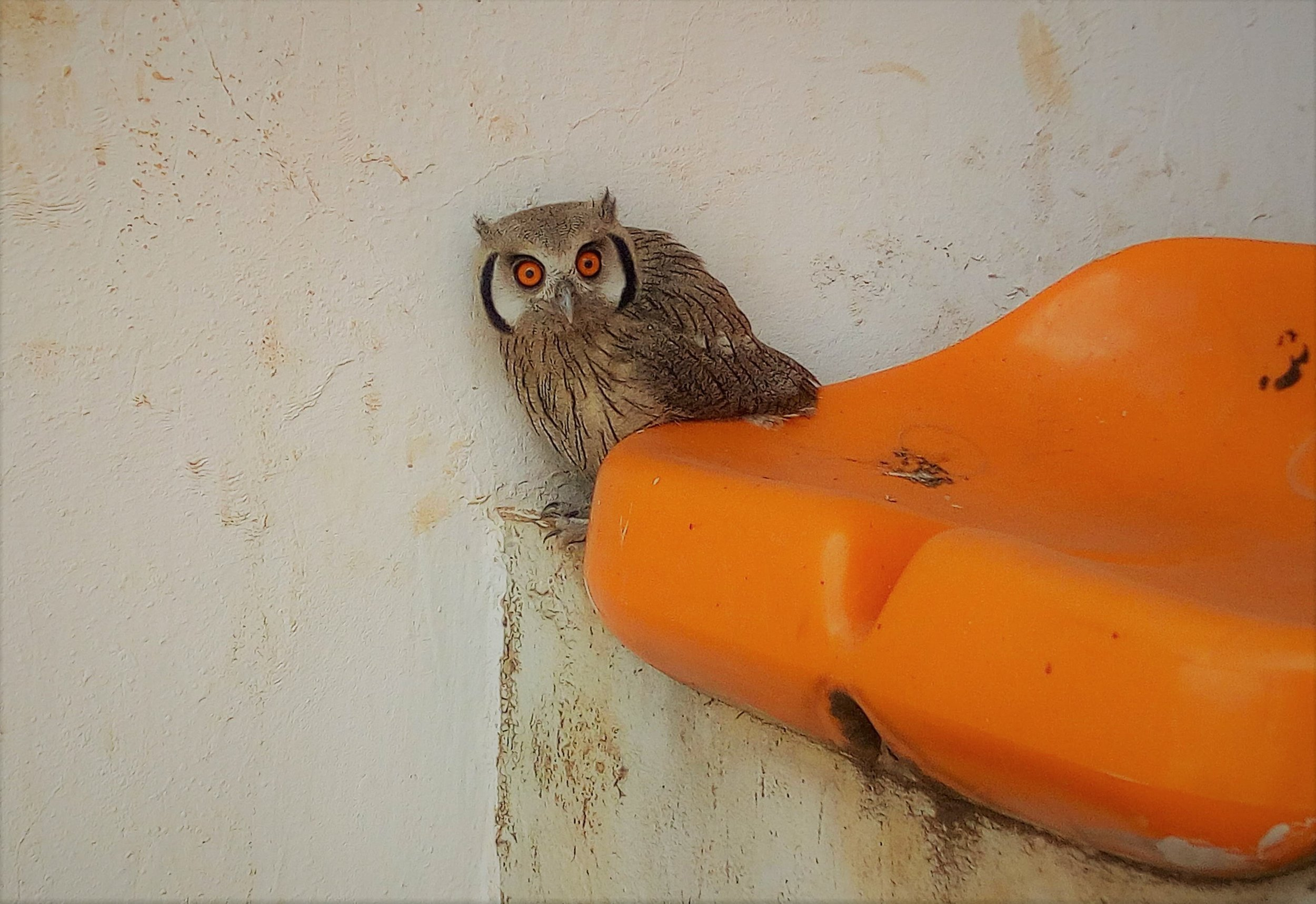 Middle schoolers spotted a baby owl as soon as they arrived at Liberty Stadium for their relay races!