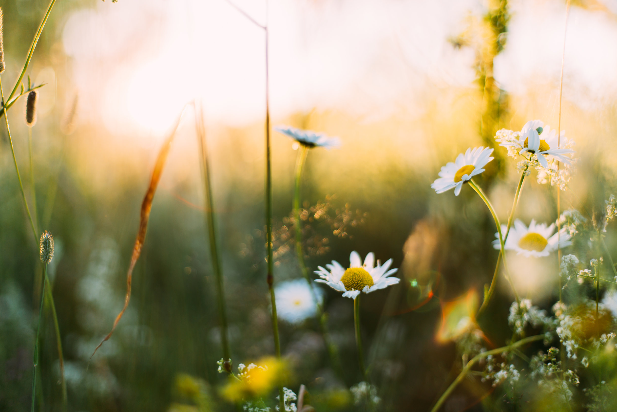 Sunlight on flowers in a field