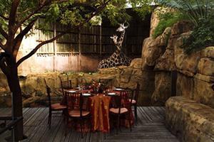 Regenstein African Journey 50-350 guests  Rental Info
