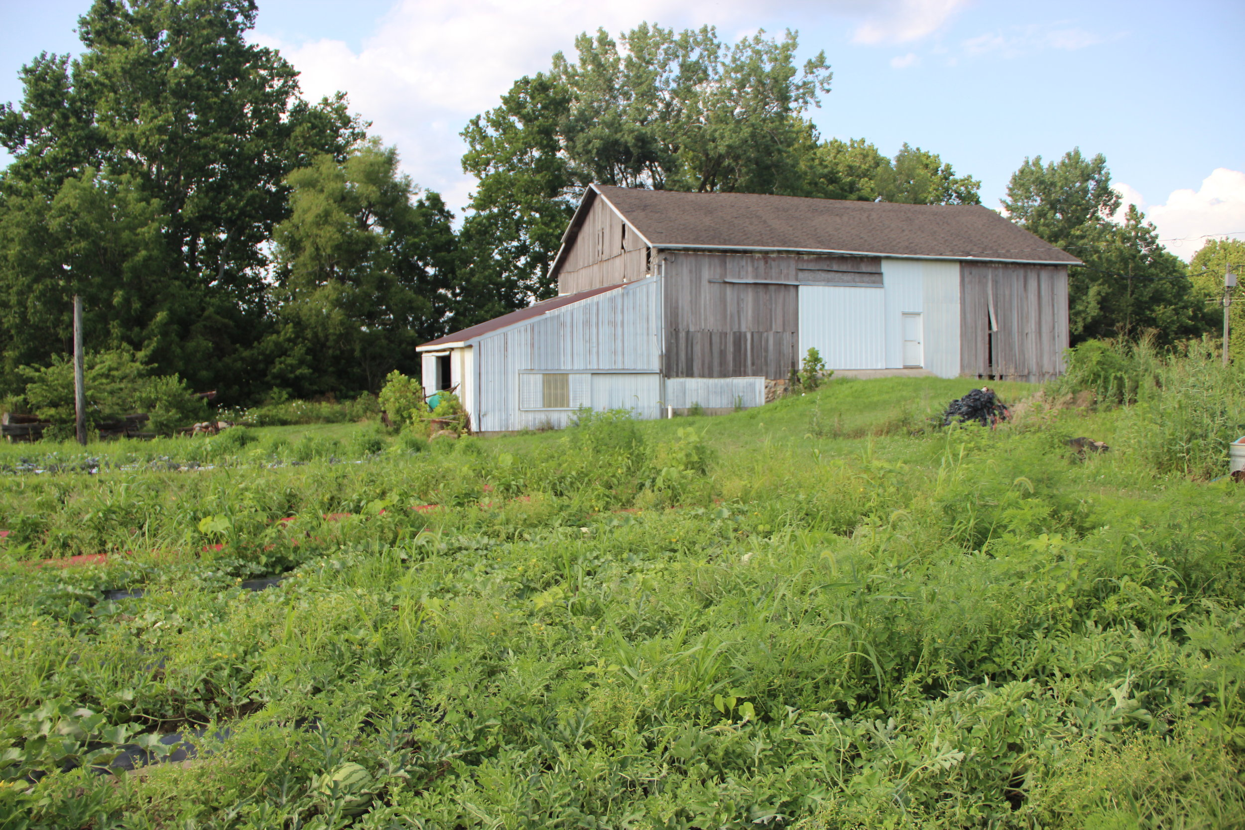 No farm visit is complete till you see the barn, it's perfect since it's framed by his garden.
