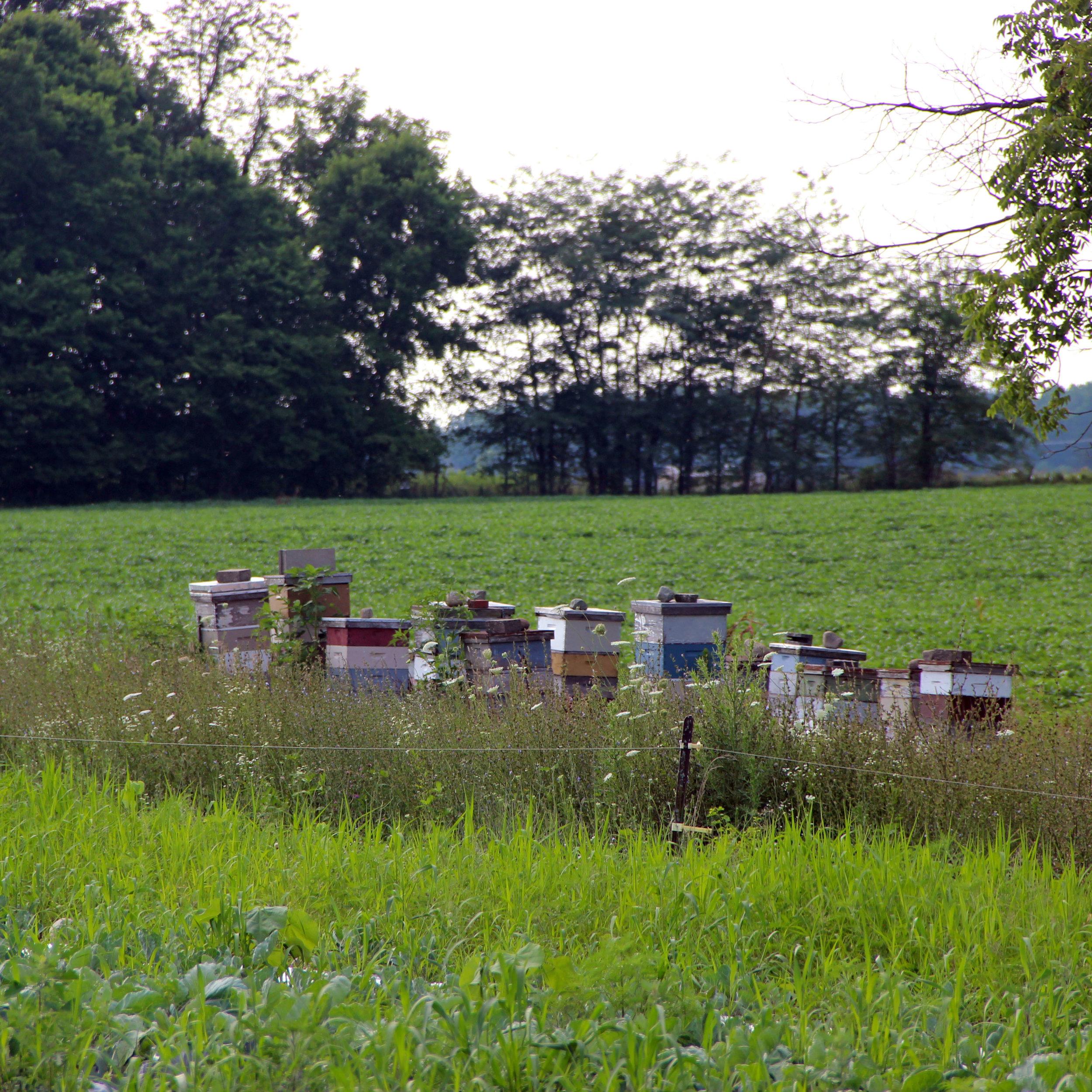 Fresh honey is the best!