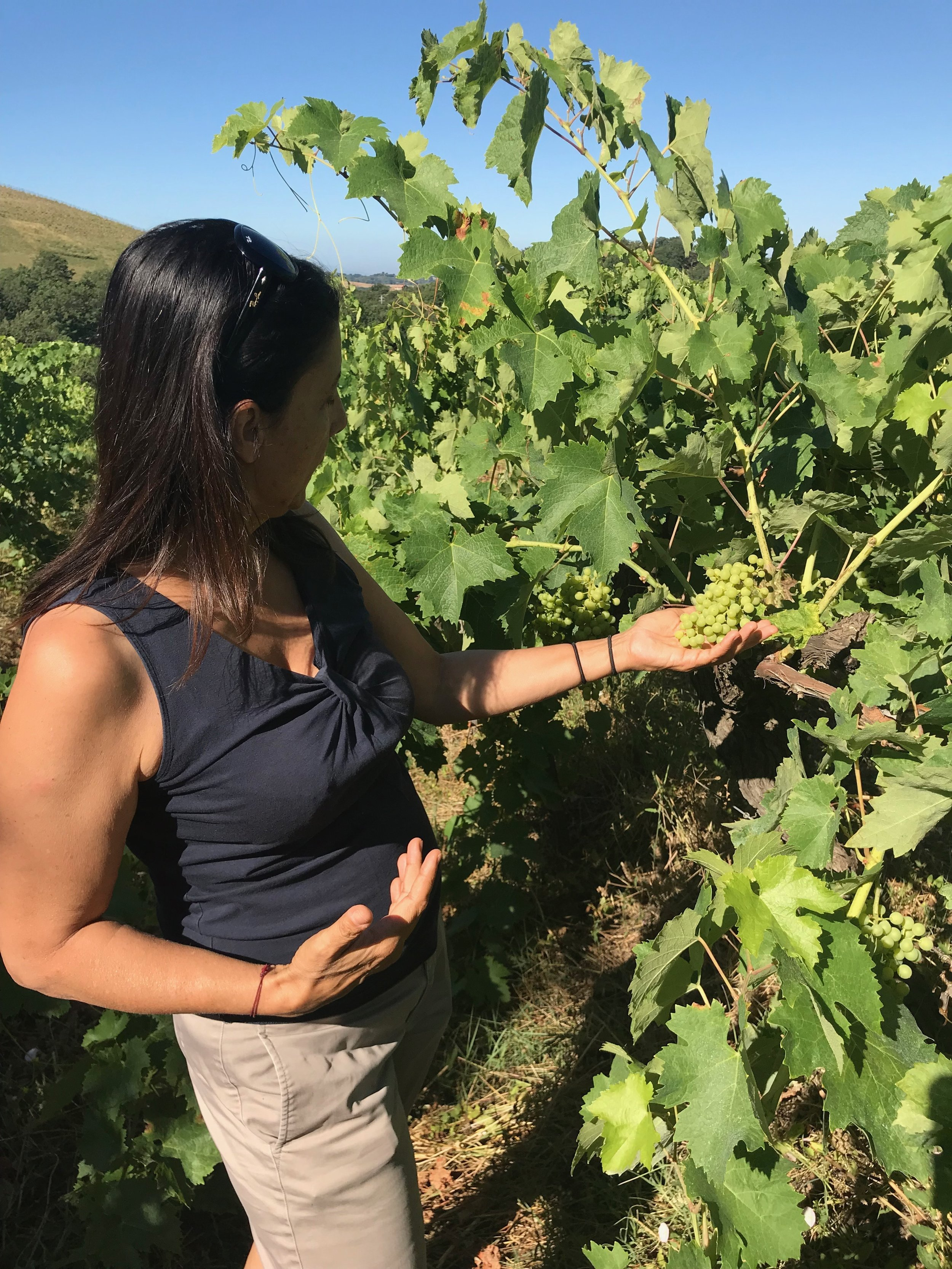 La Maliosa goes back to its roots of Maremma Italy making organic and biodyanmic wines with old native varietals.
