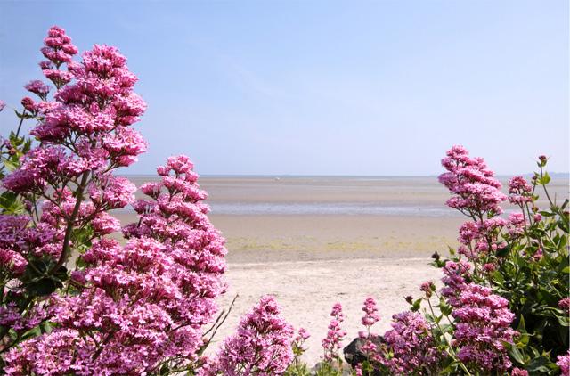 Sunny day on Sandymount strand on the South Dublin coast.jpg