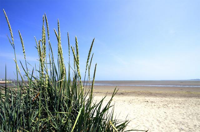 Sandymount on a Sunny day.jpg