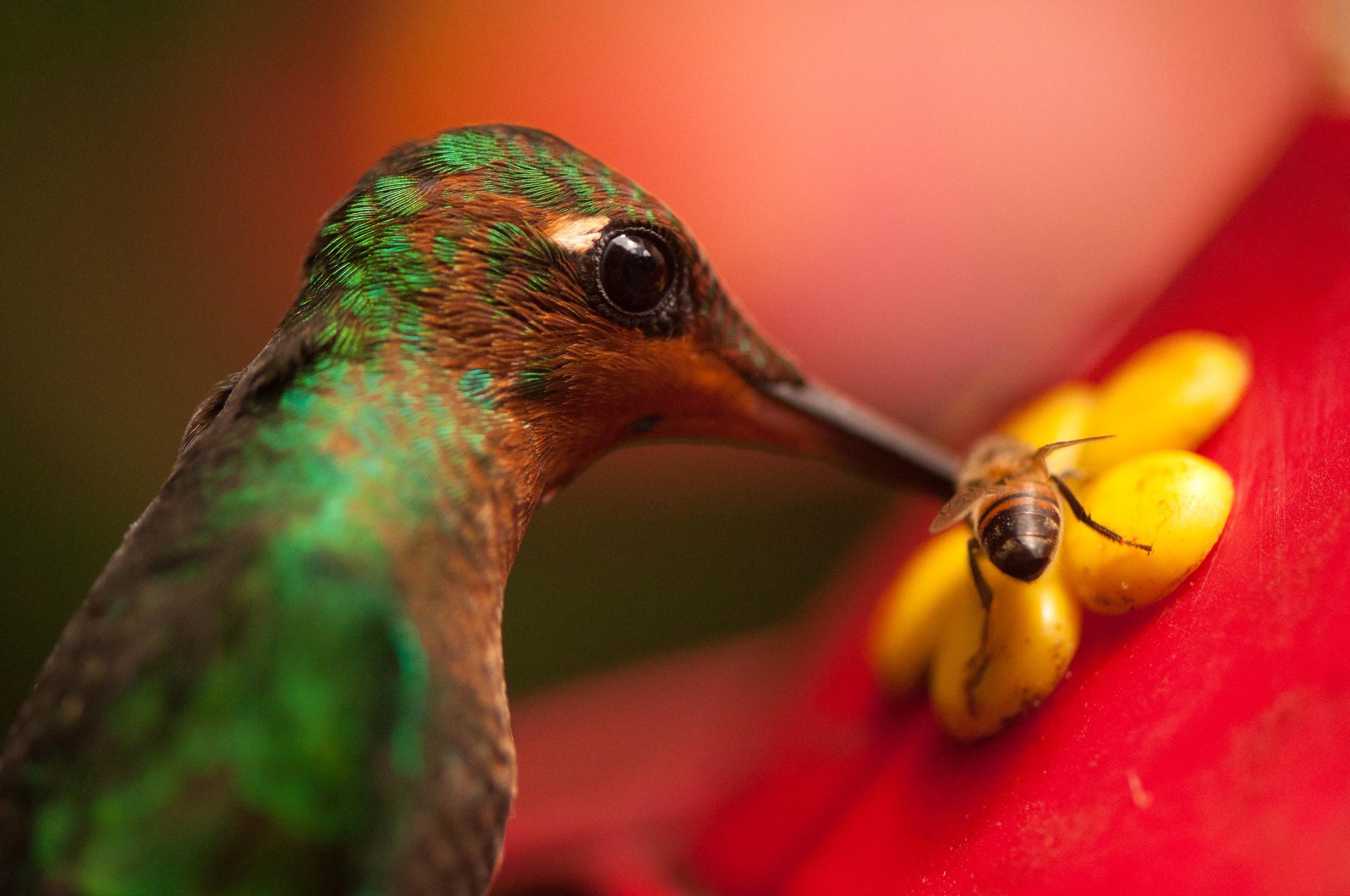 Wildlife_LinaCollado_Sharing.jpg