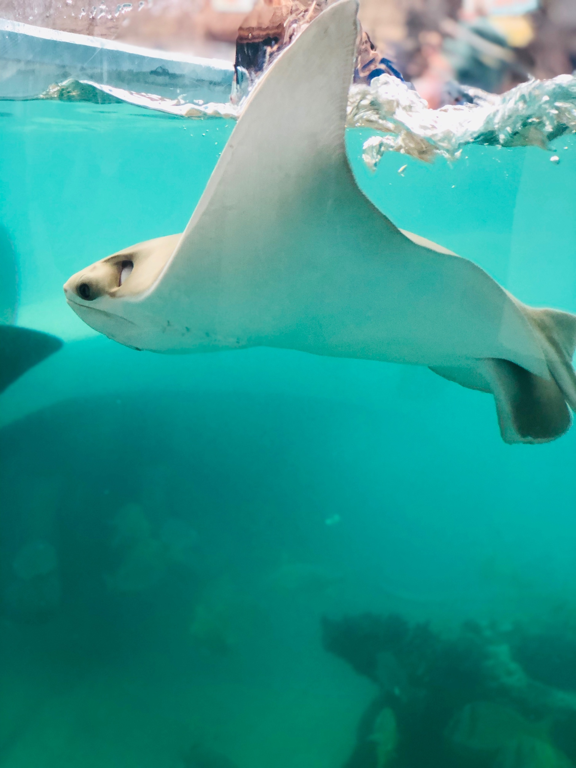- The stingrays were really majestic to watch