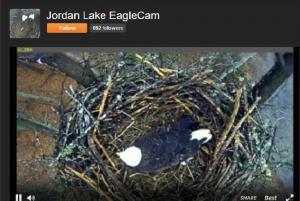 Screenshot of Corps' EagleCam website