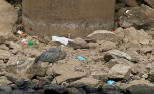 Riprap trash and bird at tailrace (2)