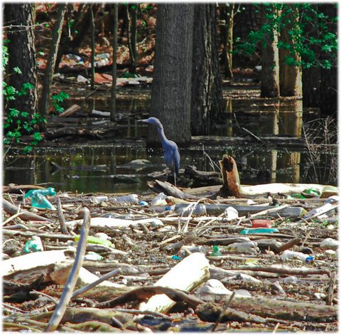 Sharpened Typical trash scene impairs wildlife habitat.jpg