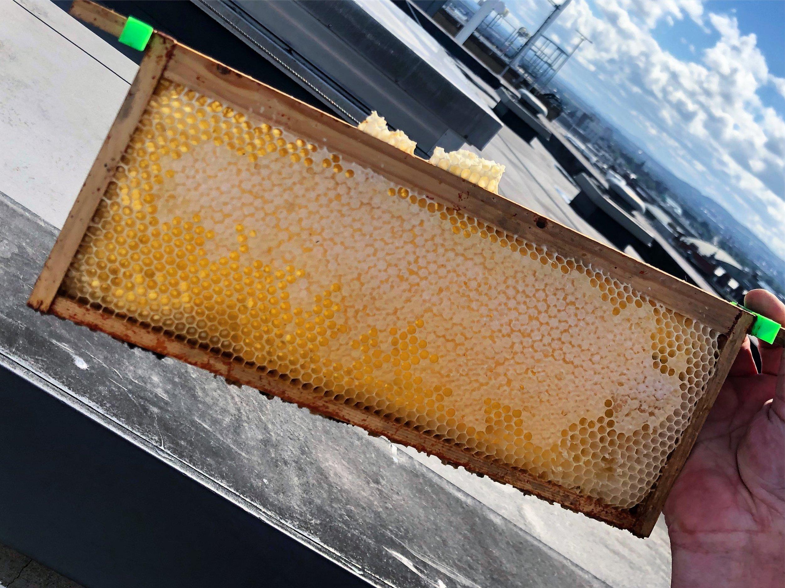 hotel rooftop honey