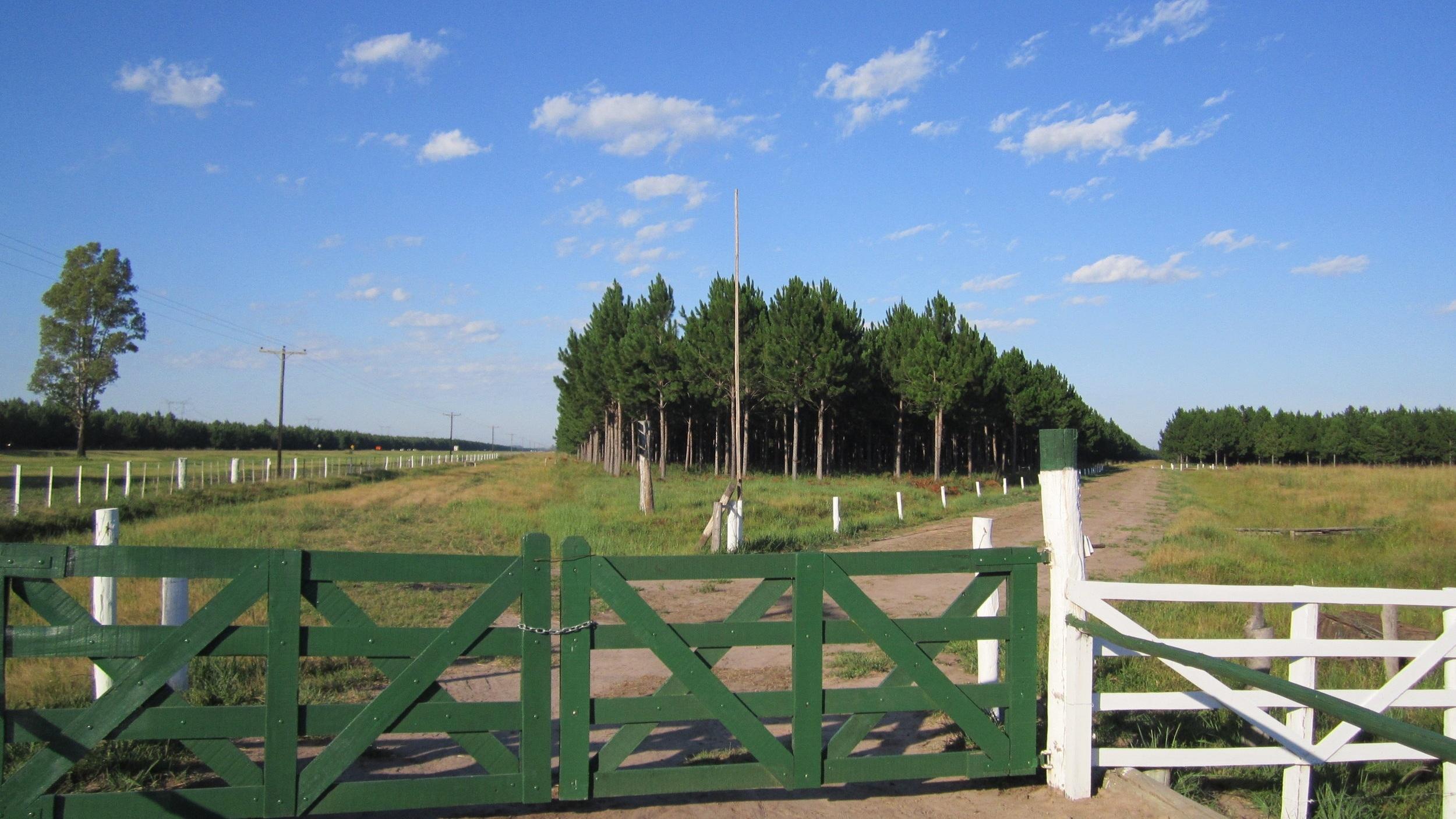 Forestry - LA NEGRA | Ituzaingó | Corrientes | 1600 hectaresLA NEGRITA | Ituzaingó | Corrientes | 613 hectaresEL CARRIZAL | Ituzaingó | Corrientes | 580 hectares