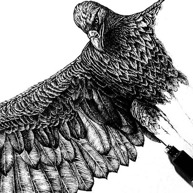 Miss a little bird love. .. . . . #penandinkillustration #penart #inkonpaper #inkart #inkdrawing #penandink #birdsofprey