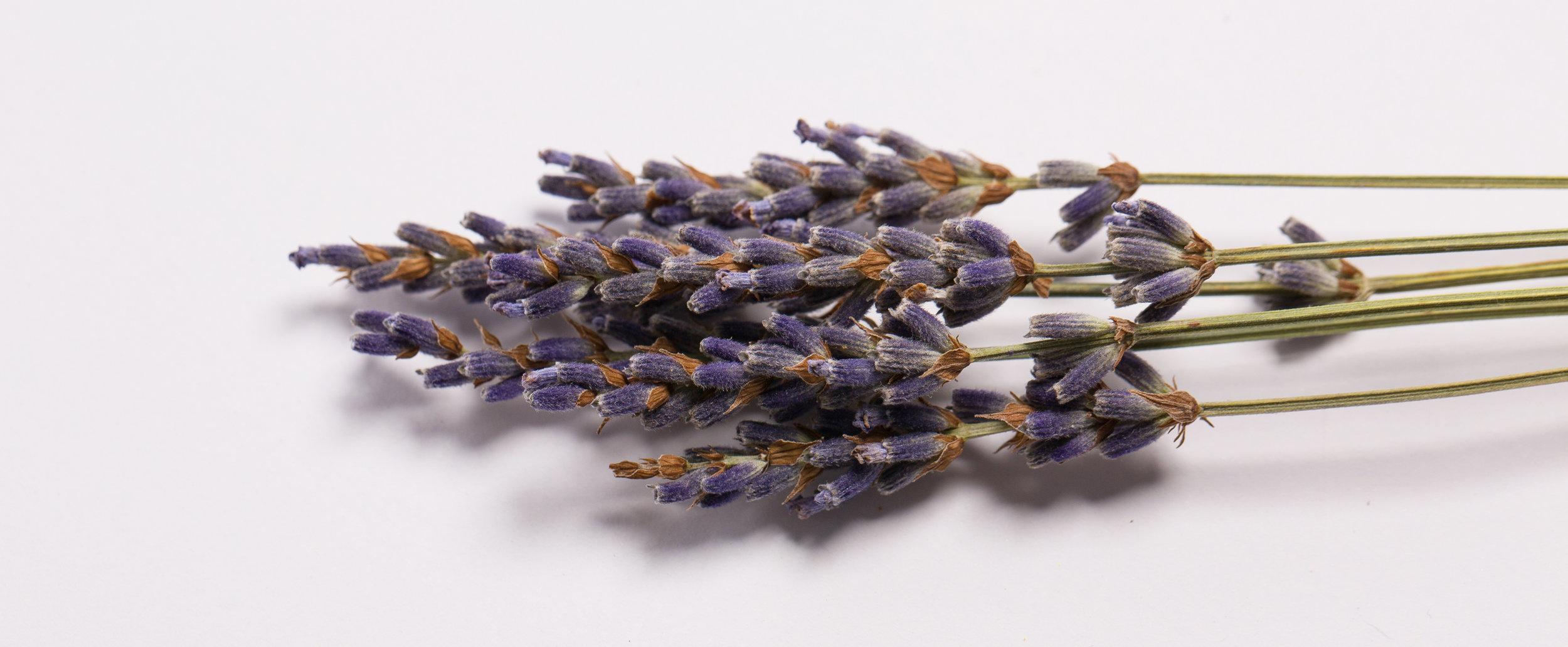 Herbalist_3.jpg