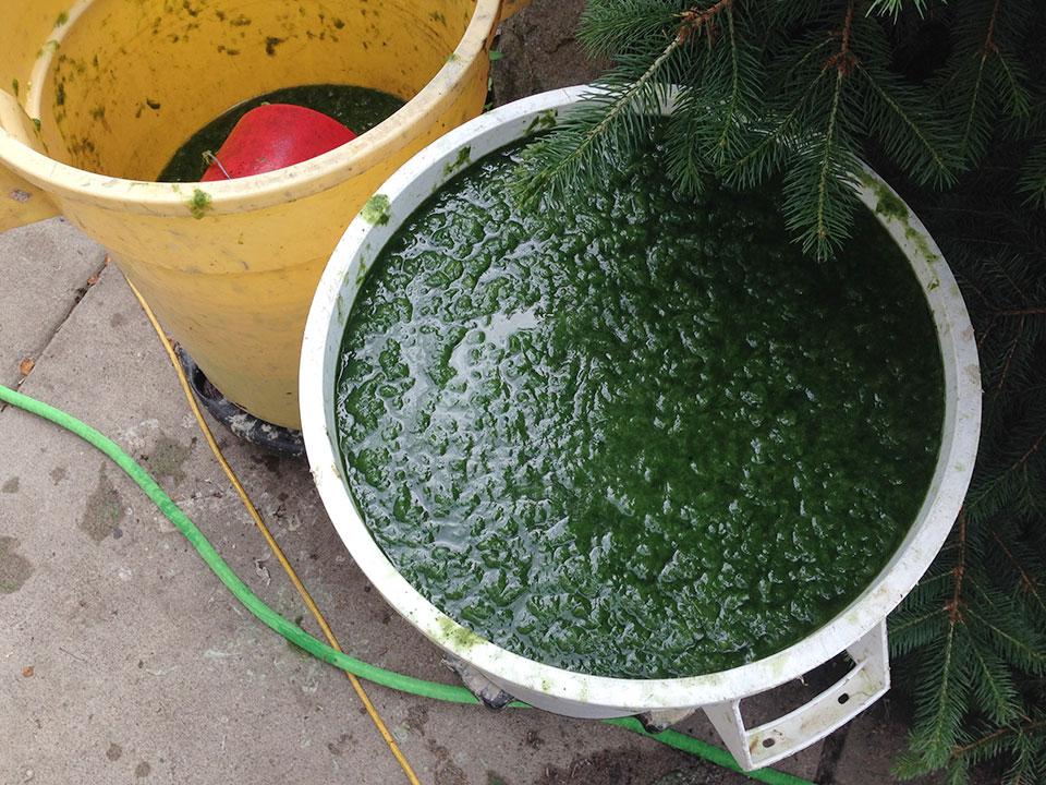 pulp-from-local-biowaste.jpg