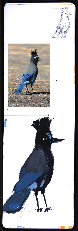 gouache_stellers_jay_09052019.pngm Steller's Jay, Not a Blue Jay, M Graham Gouache, Creta Gouache