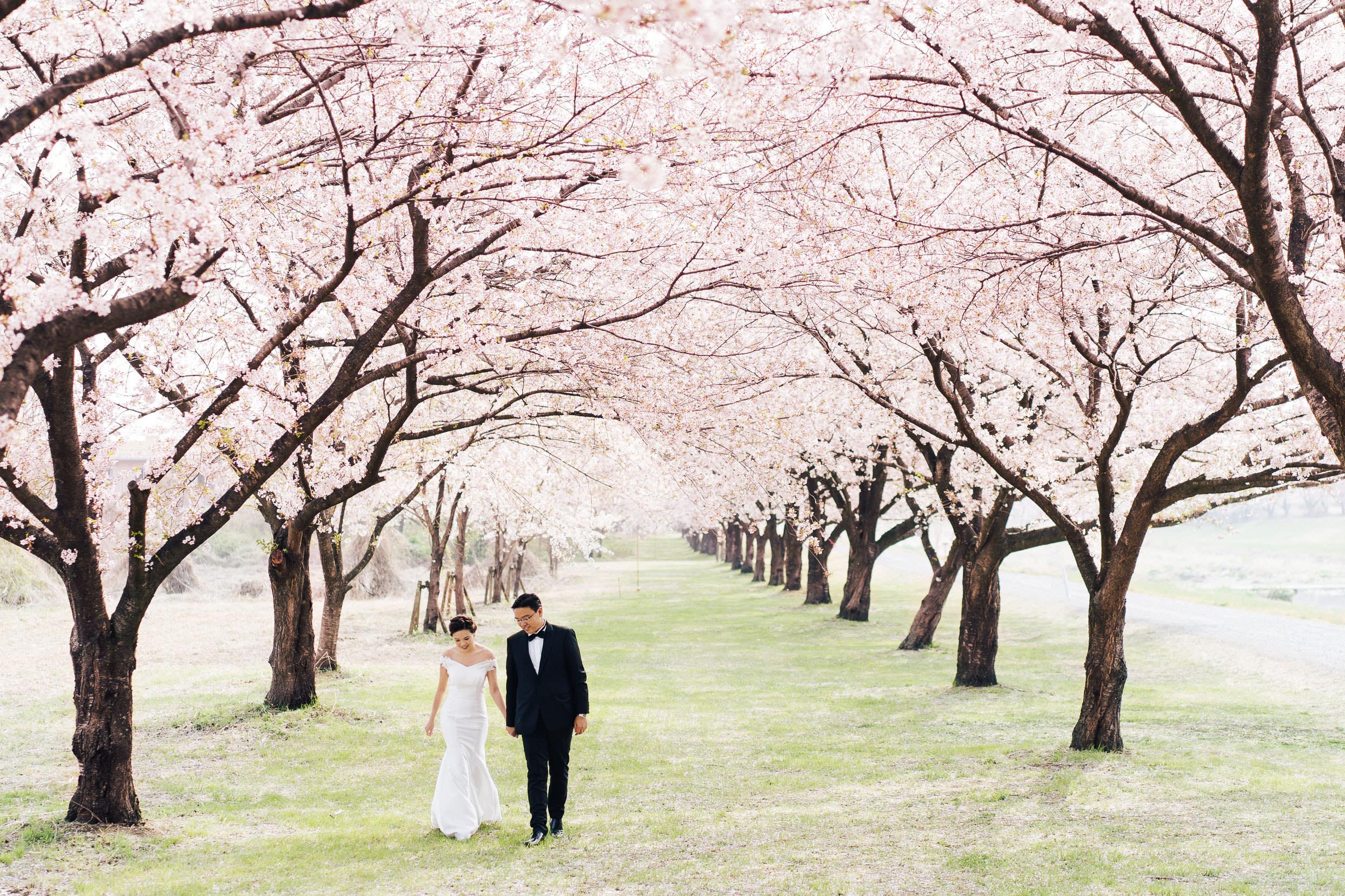 桜ロケーションフォト - 168,000 yen + tax ~【 3月下旬~5月初旬 限定プラン 】※全国対象満開の桜を求めて