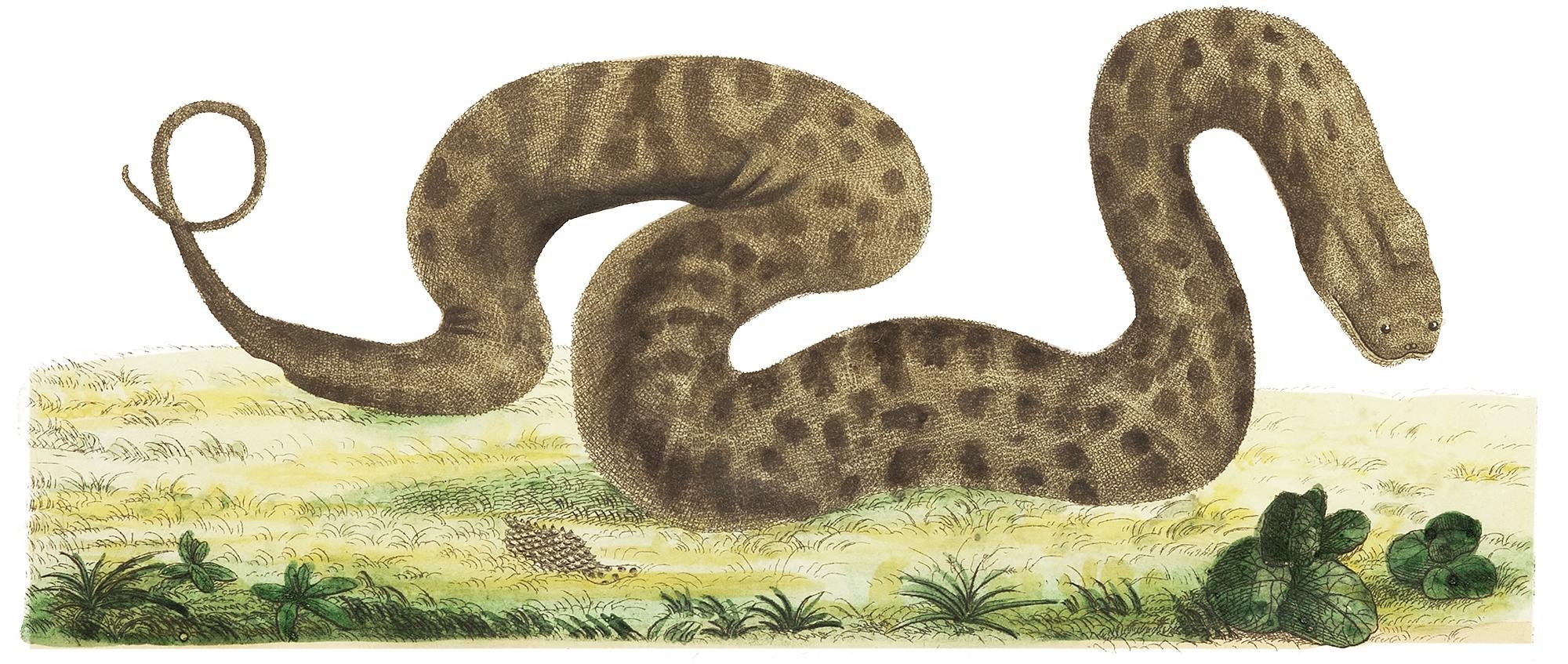 snake small.jpg