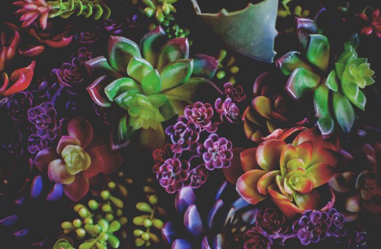 cactus_couleurs.png