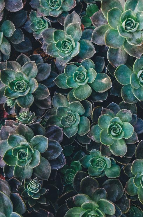 succulentes.png