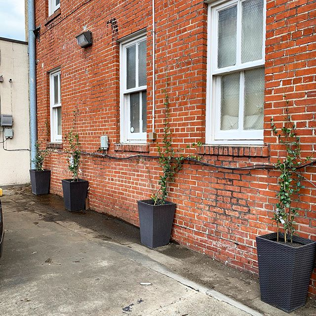 With the help of @kendramckinneydesigns we cleaned out this back area and planneted some beautiful jasmine. We can't wait to watch it grow and become a wonderful addition to our great downtown area!