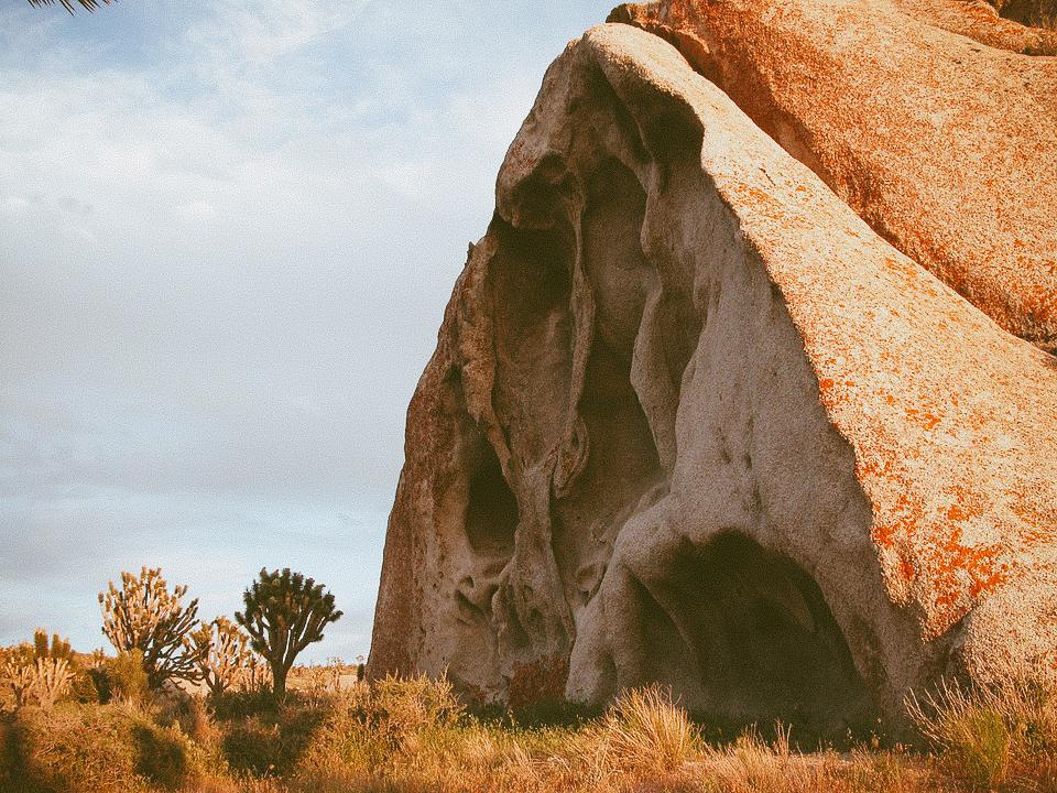 Joshua Tree | Forange & Wander