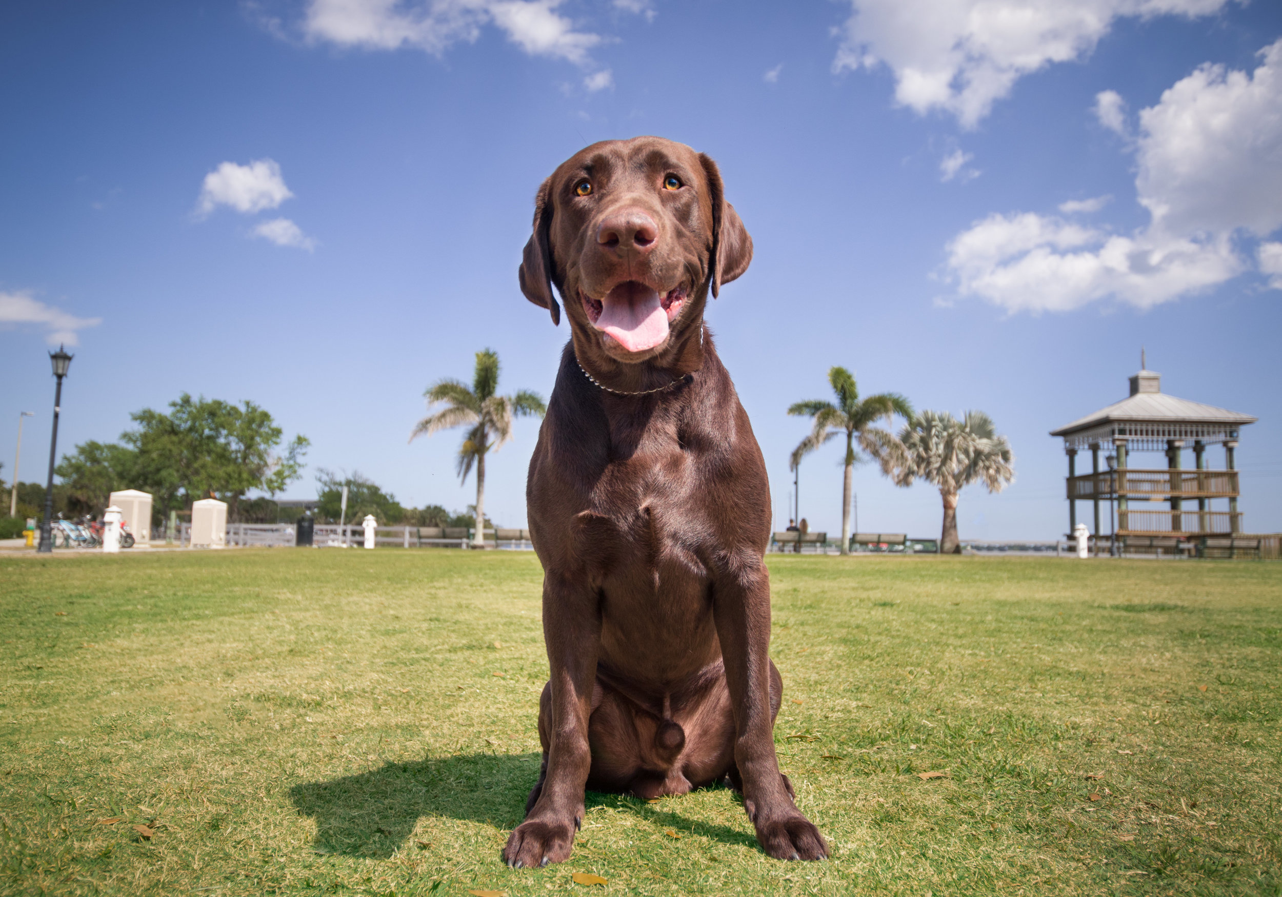 Hercules is an energetic 2-year-old lab who is still learning how to walk nicely on a leash, but will sit pretty and smile if treats are involved! He had a wonderful time visiting the Cocoa Village Riverfront area for the first time this Spring. There was plenty of sun, green grass, and beautiful scenery for him to enjoy!