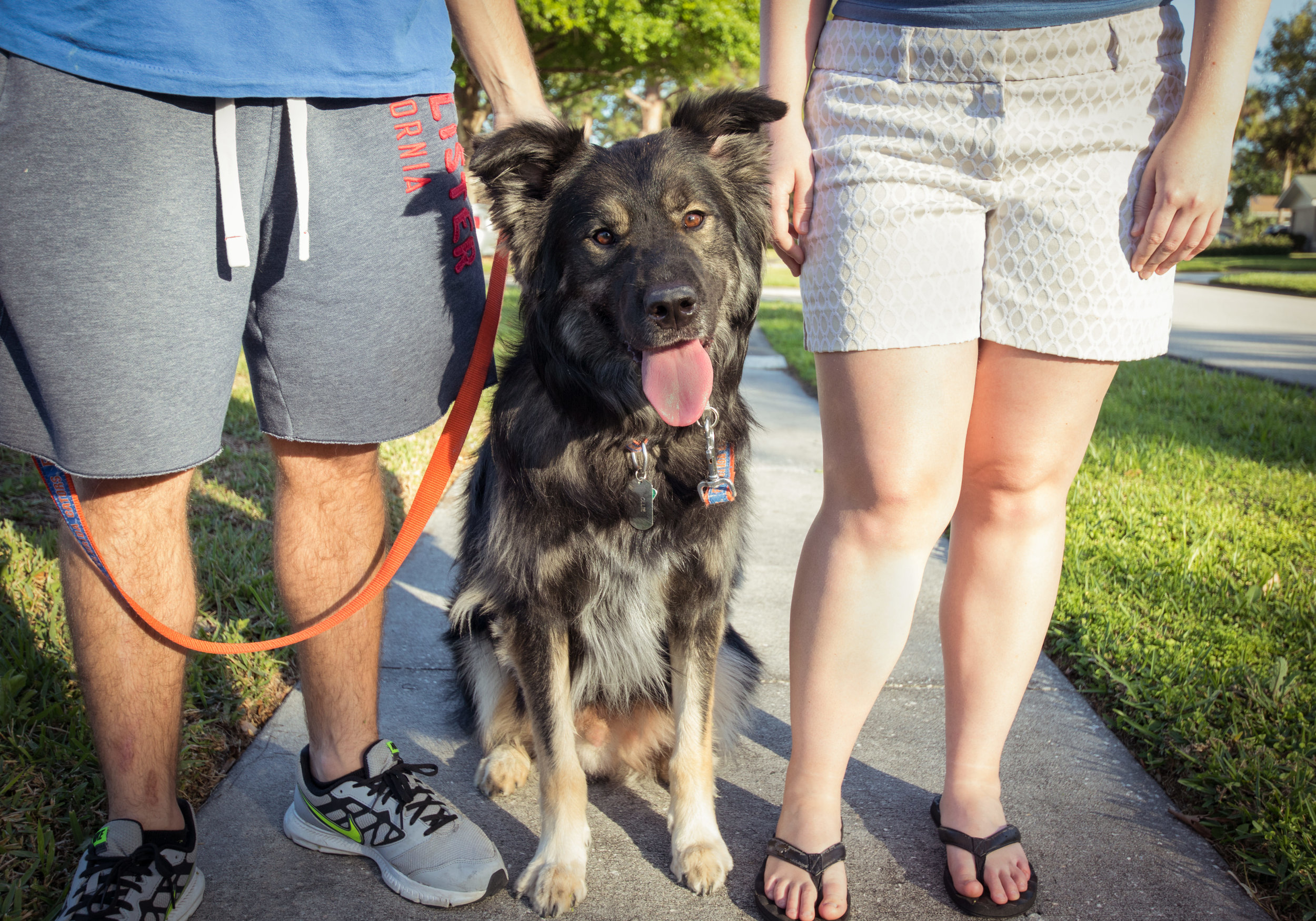 Charlotte and Kevin took Oliver for a walk in a quiet neighborhood in Rockledge. Ollie is a 2-year-old Australian Shepherd Mix, who does an adorable stretch and vocal warmup before barking to let his owners know it is time for his walk!!