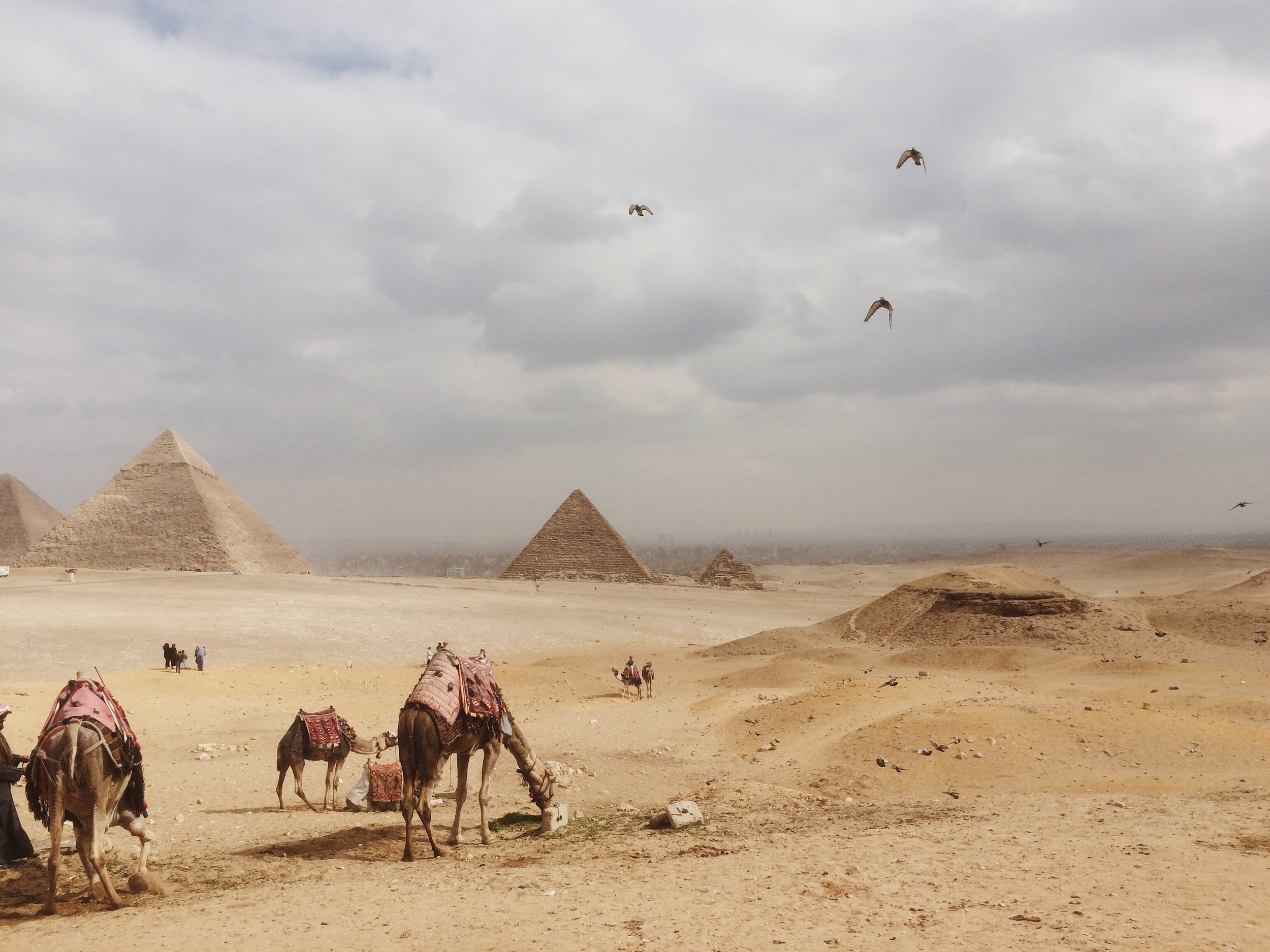 Camels_Pyramids_Egypt_2017.JPG
