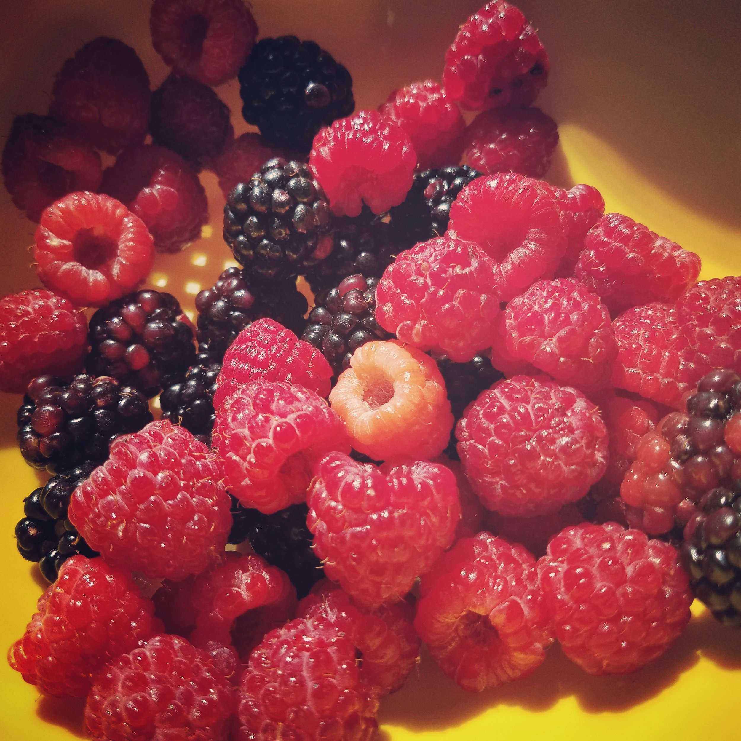 Raspberries from Farm.jpg