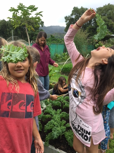 Gardening - Garden as Classroom…Plant a seed and watch it grow! The garden at Hanalei School is a great living classroom for the children to combine their interests in eating, and being outside, with the Science curriculum offered through S.T.E.M.