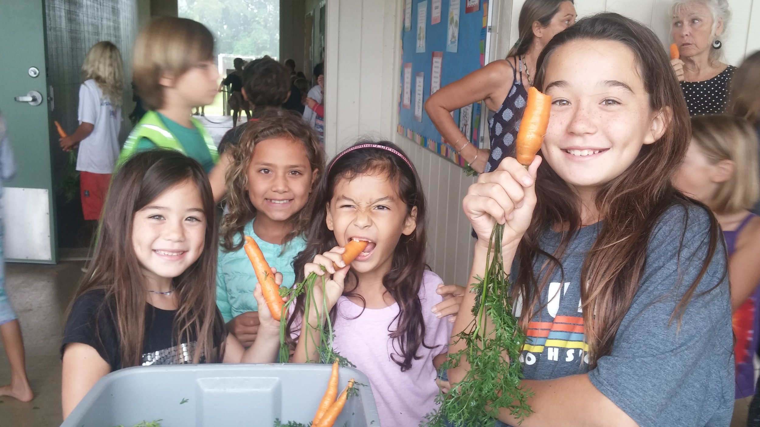 carrots 3.jpg