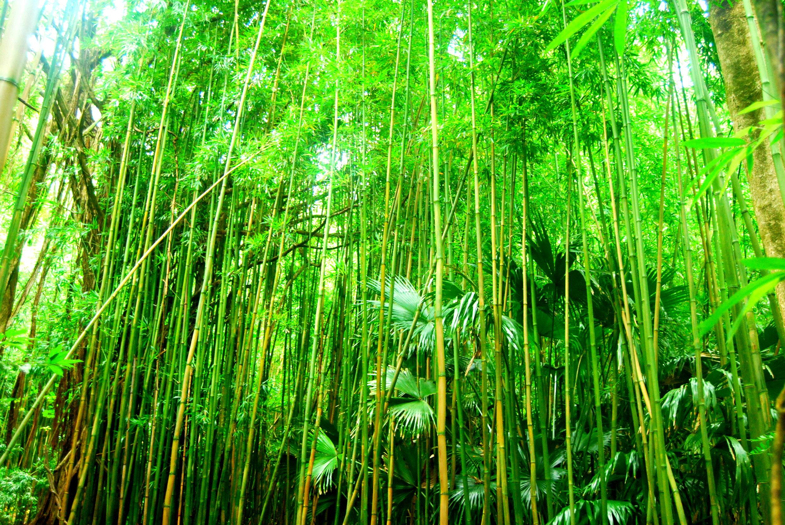 Bamboozle.jpg
