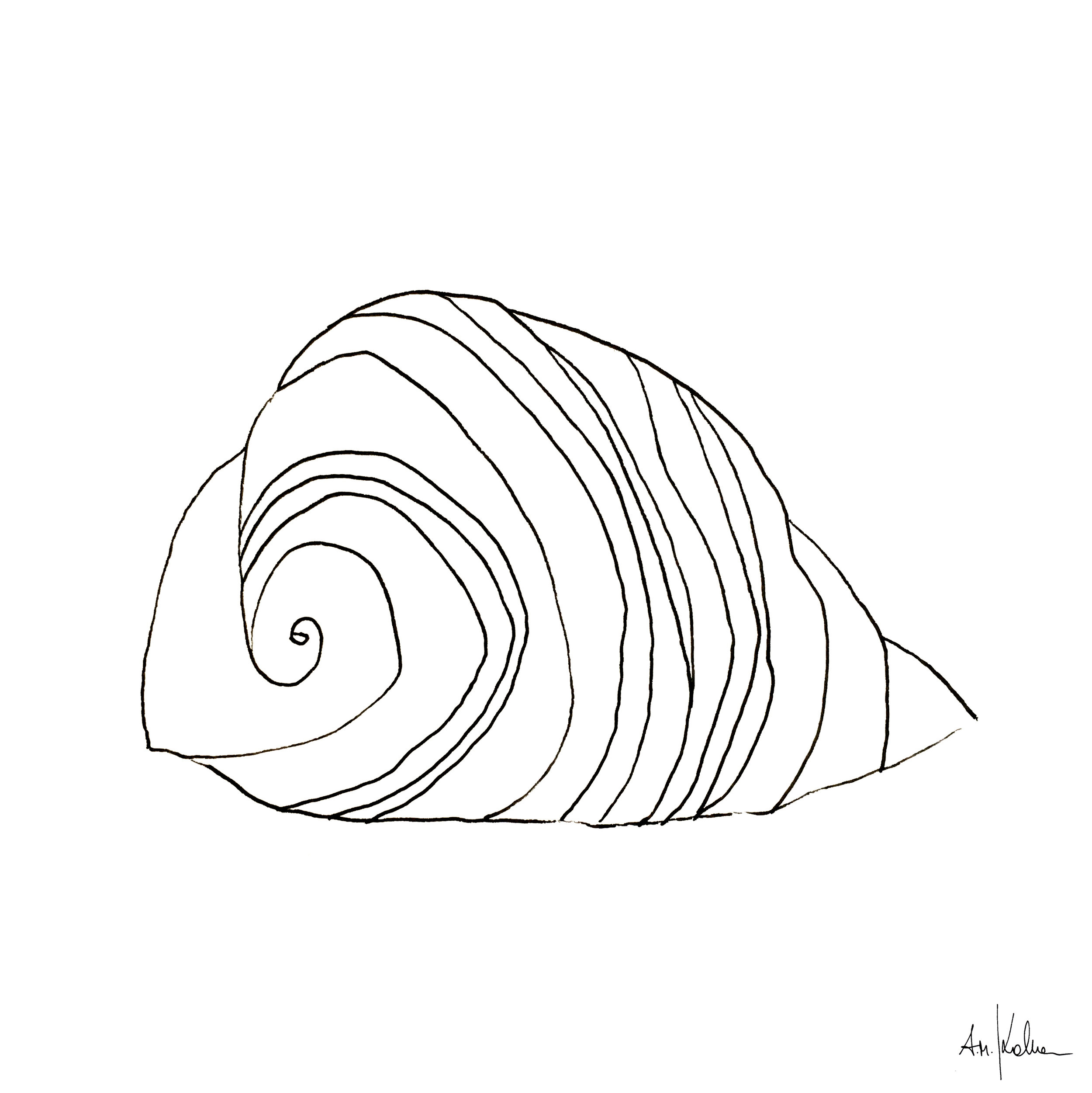 SHELL I   Ink on Hahnemühle paper - 190gr I A4 format. Write a request by just clicking on this image.