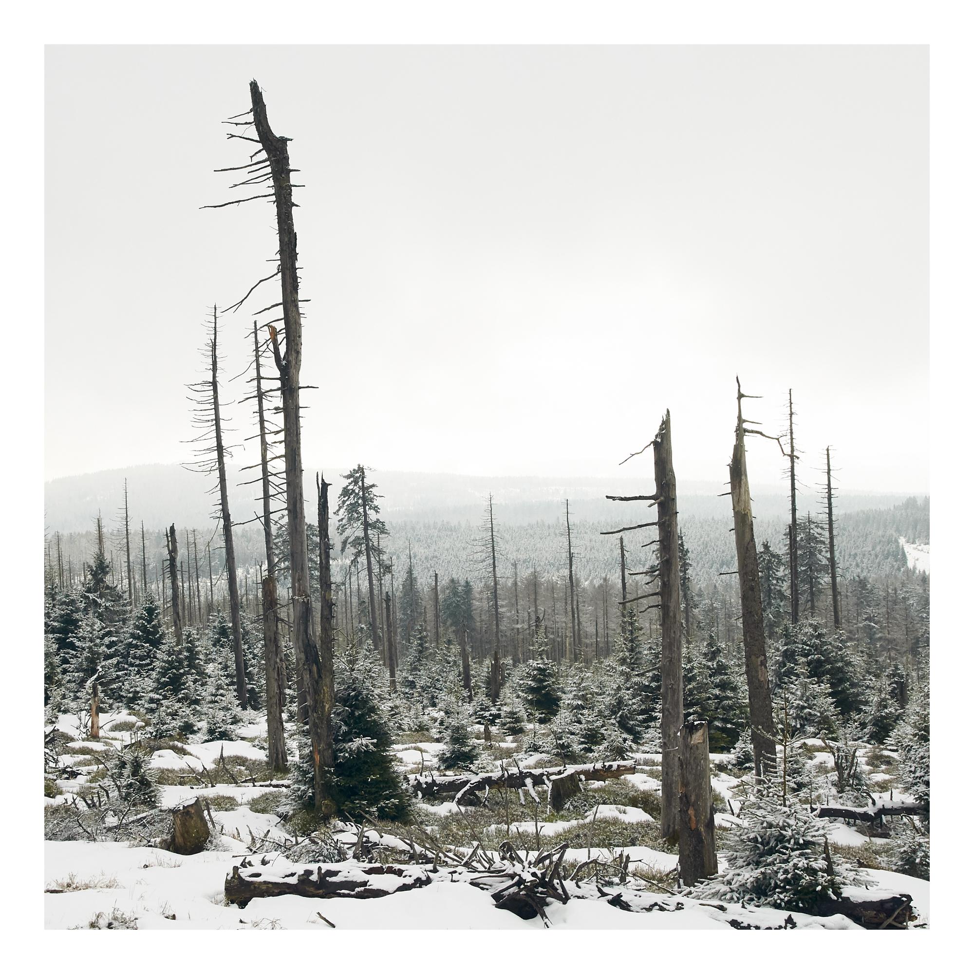 Brocken-trees2-untitled-0677 1.jpg