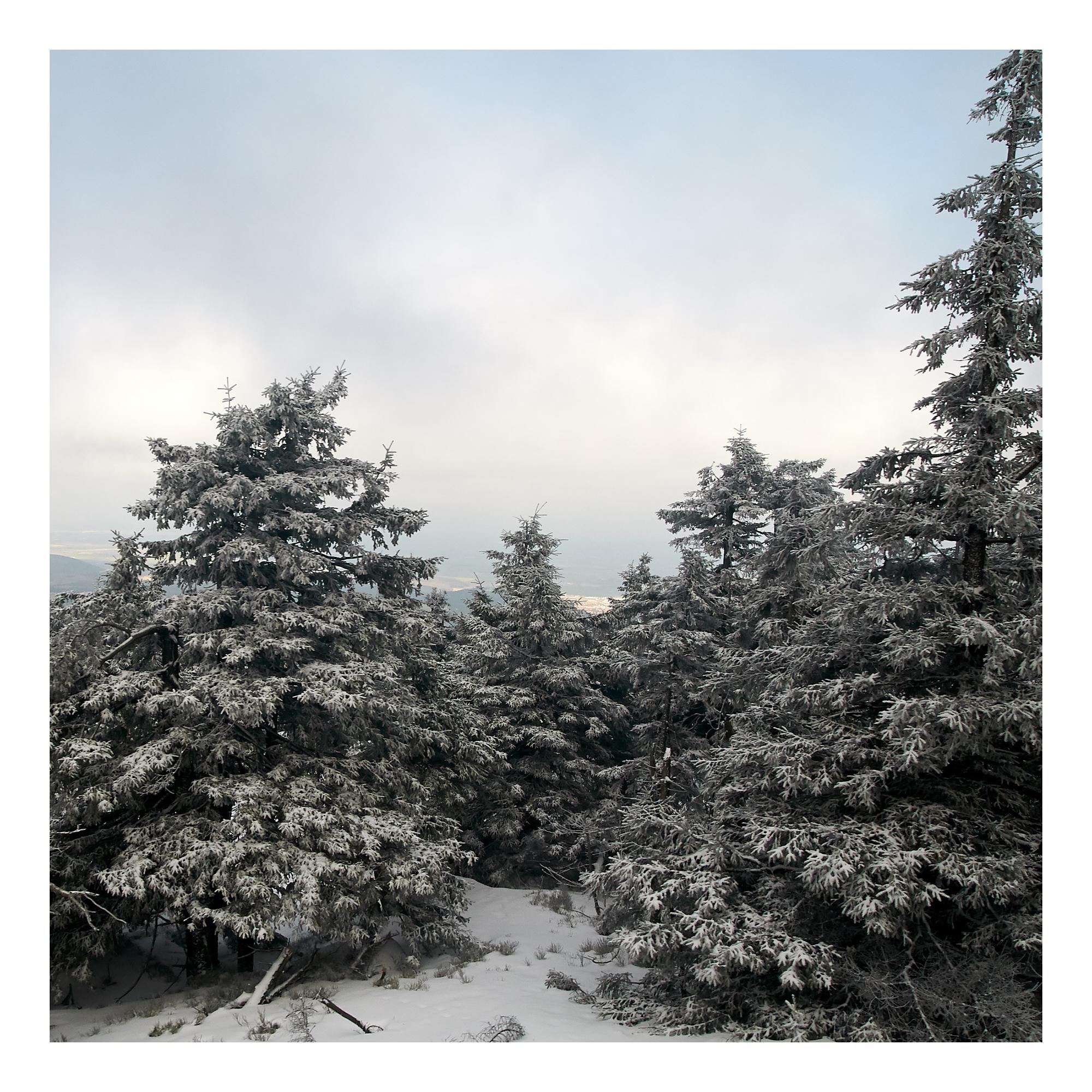Brockentrees-untitled-0532 1.jpg