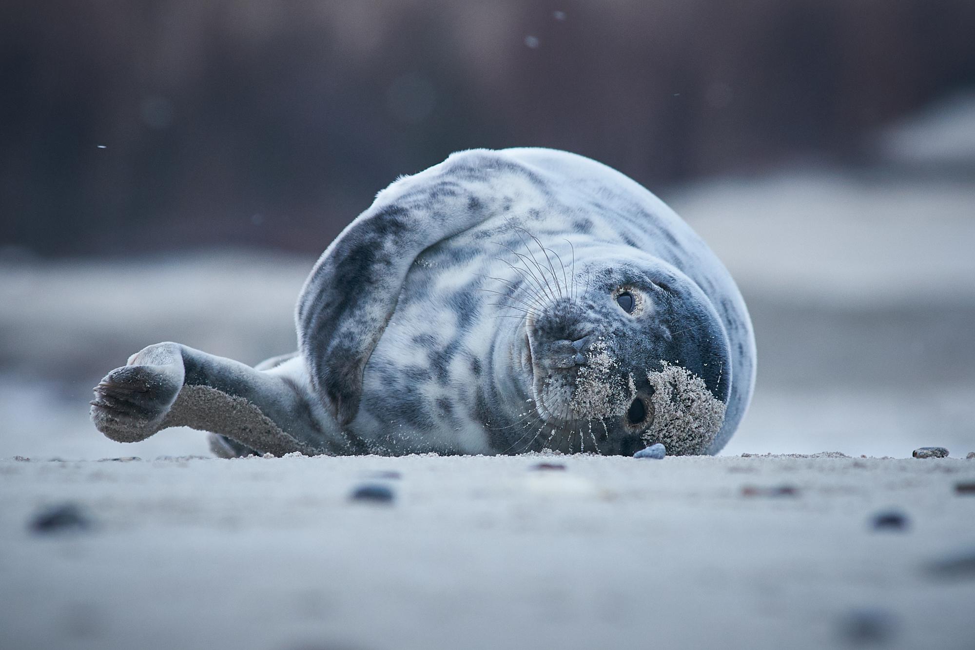DMZ_4557 - Seal.jpg