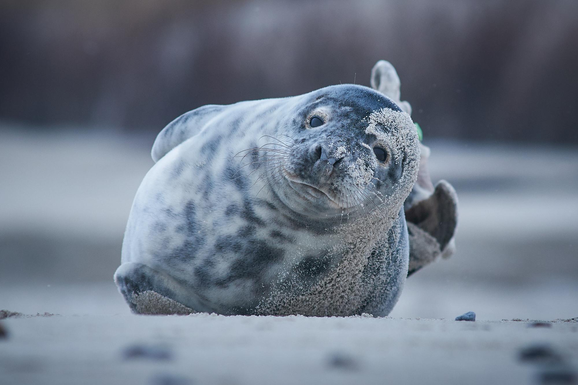 DMZ_4564 - Seal.jpg