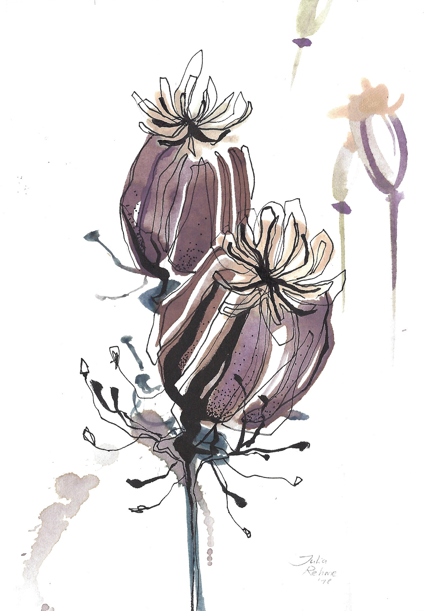 BotanicalSeries_Poppy.jpg