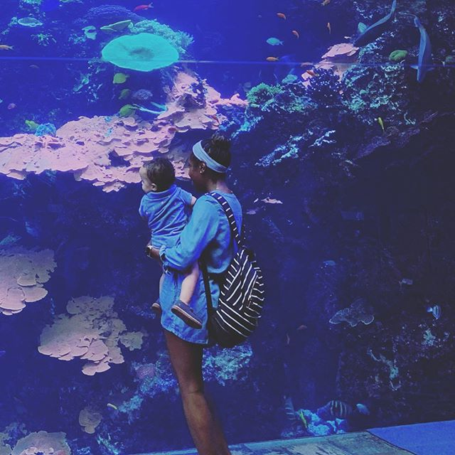 When was the last time that you took a day vacation?  It's so easy to get caught up in our daily routines, and what everyone else has planned for us.  Since my brain was on overload, we spent some time today at the @georgiaaquarium  Jett loved the jellyfish!  The name of the fitness and wellness game is balance y'all. Some days you are doing 2 minute long planks, and some days you need a brain break. When you get balance down to a science, you've cracked 1/2 the code.  Comment below with where you had your last day vacation?  #atlaquarium #mommyandbaby #toddleractivities #fitmomma #fitmomsinspire #fitmomlife #simplyfitwithashley #melaninfitness #momtummy #sahmomlife #momtobe #postpartummom #postpartumbody #strongmoms #momstrong #momsintofitness #pregnancyworkouts #pelvicfloorexercises #balancedmom #fit4mom #boymomlife #gritandgrace #busytoddler #backtothebasics #wednesday #girlonthego #workingmoms #morningperson